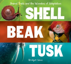 Shell, Beak, Tusk